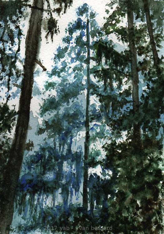 peinture aquarelle d'une foret dense en Bretagne AQUA 003